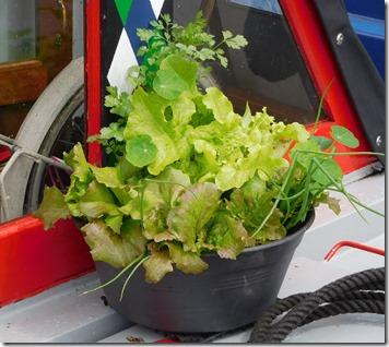 10 salad bowl
