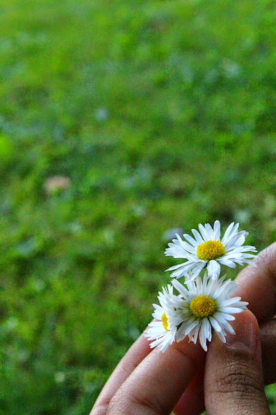 suomenlinna flowers
