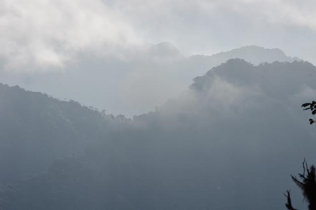Cloud Forest à Tandayapa au-dessus de Nanegalito, 2000 m (Pichincha, Équateur), 12 décembre 2013. Photo : J.-M. Gayman