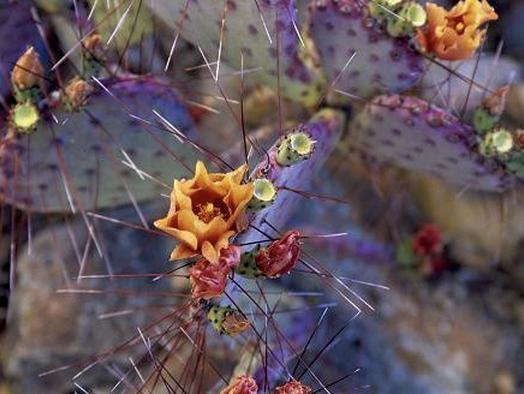 Kaktusi.png