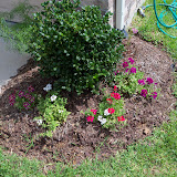 Gardening 2010, Part Three - 101_3913.JPG