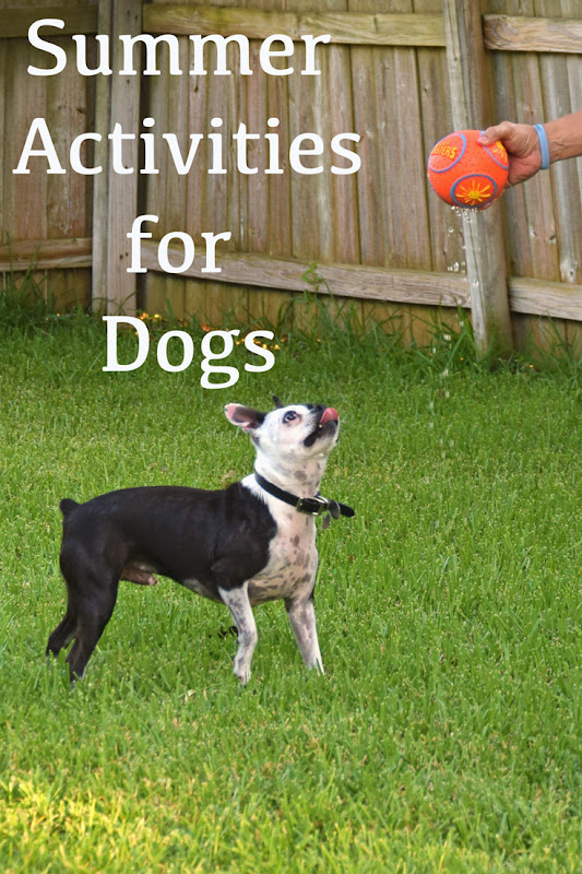 Easy summer activities to get the energy out of your dogs during the summer heat. From water toys to bubbles, we offer simple ideas. Along with activities we discuss Purina Beyond Grain Free Dog Food and why we chose to have it be the fuel for our dogs. #PetsLoveBeyond #CollectiveBias #AD #dogs #pets #summertime