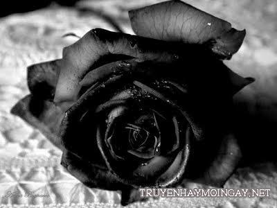 Hình ảnh hoa hồng đen đầy bí ẩn