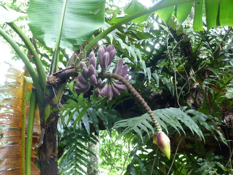 rare. bananes pommes