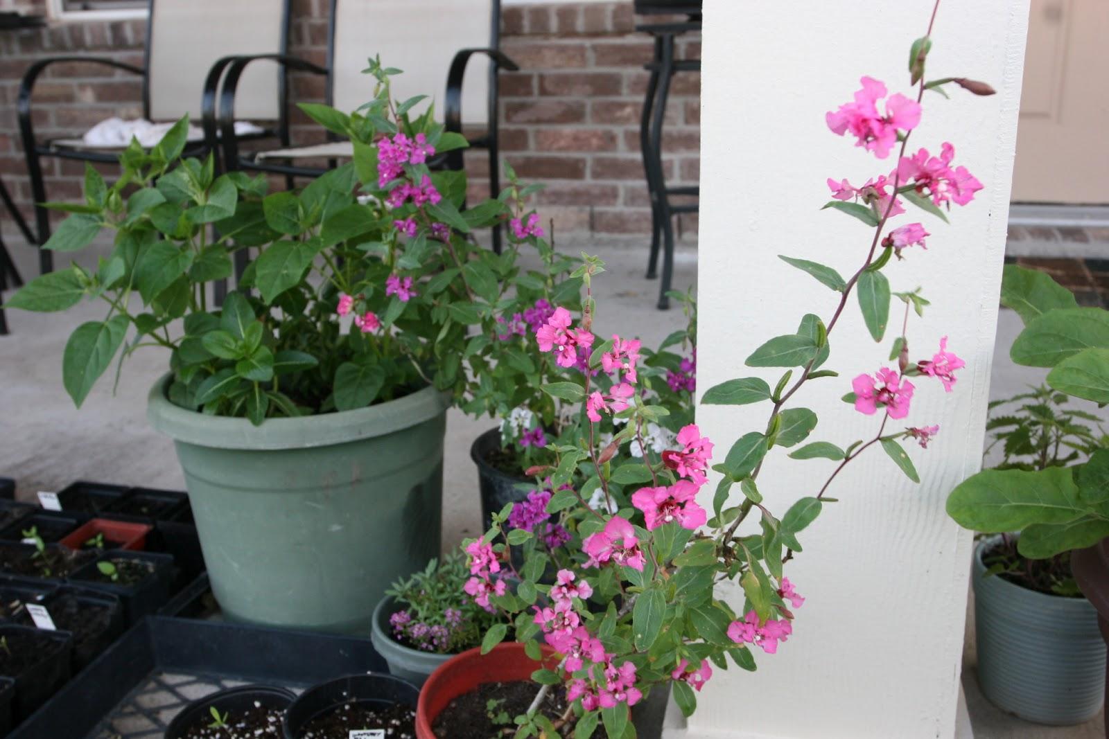 Gardening 2012 - IMG_2898.JPG