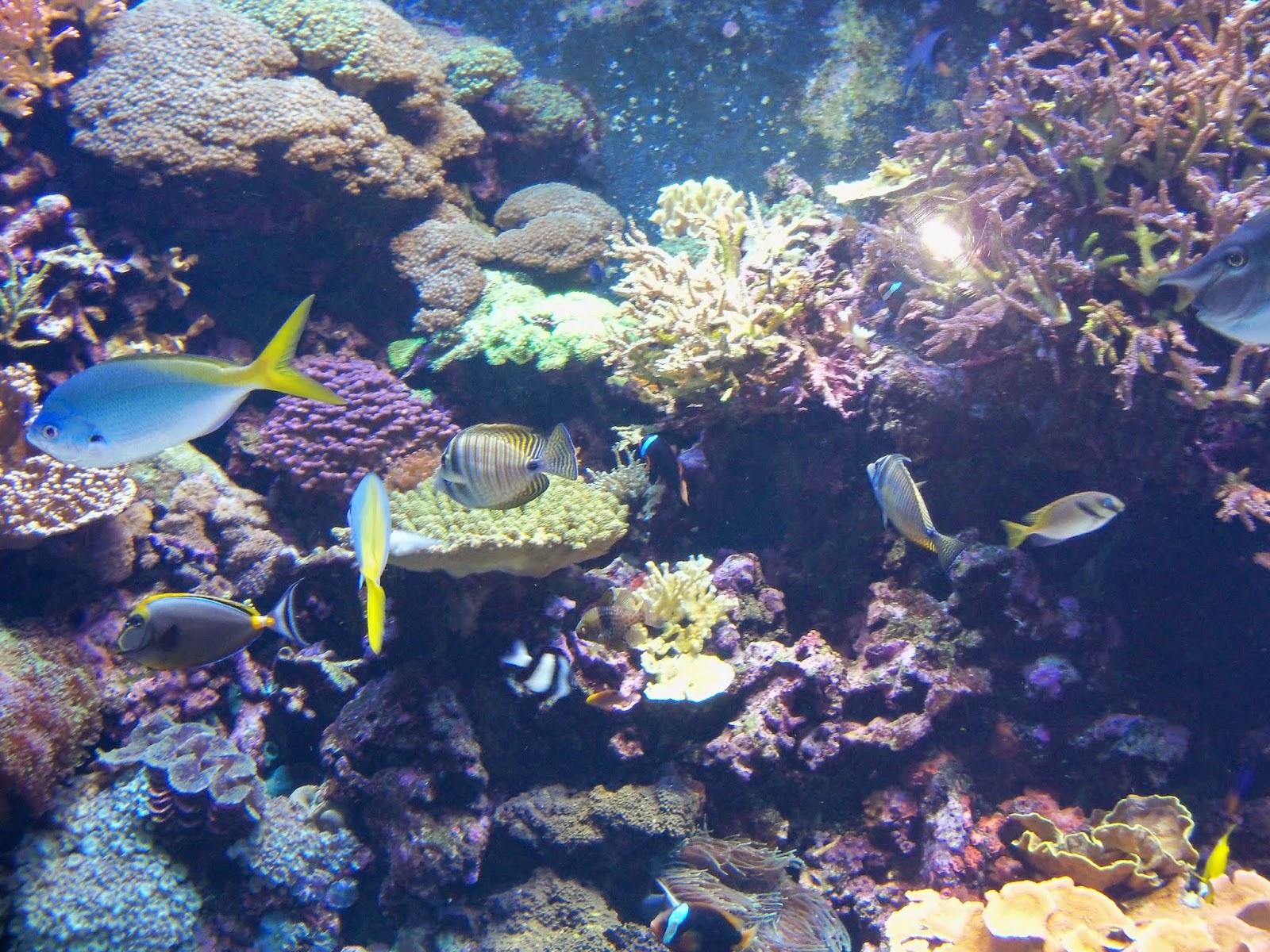 Downtown Aquarium - 116_3990.JPG