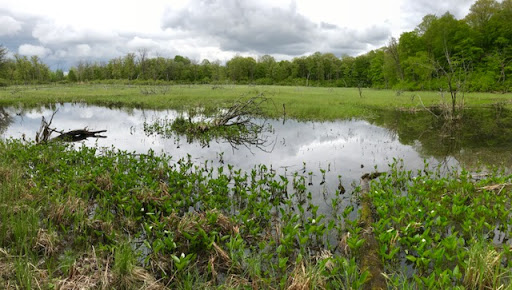 Pond near Rootin Tootin, May 22nd
