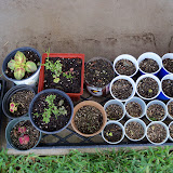 Gardening 2010, Part Two - 101_2288.JPG