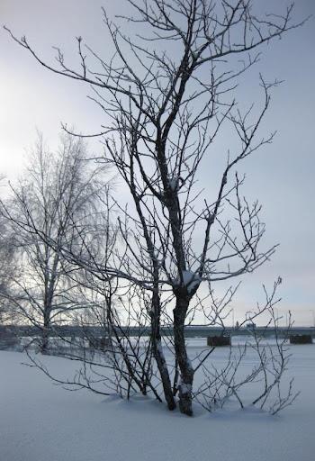 Sneu voor het boompje