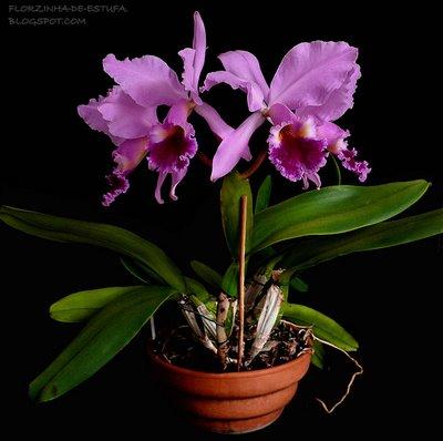 Растения из Тюмени. Краткий обзор - Страница 2 Labiata2