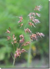 Grassy flowers-1