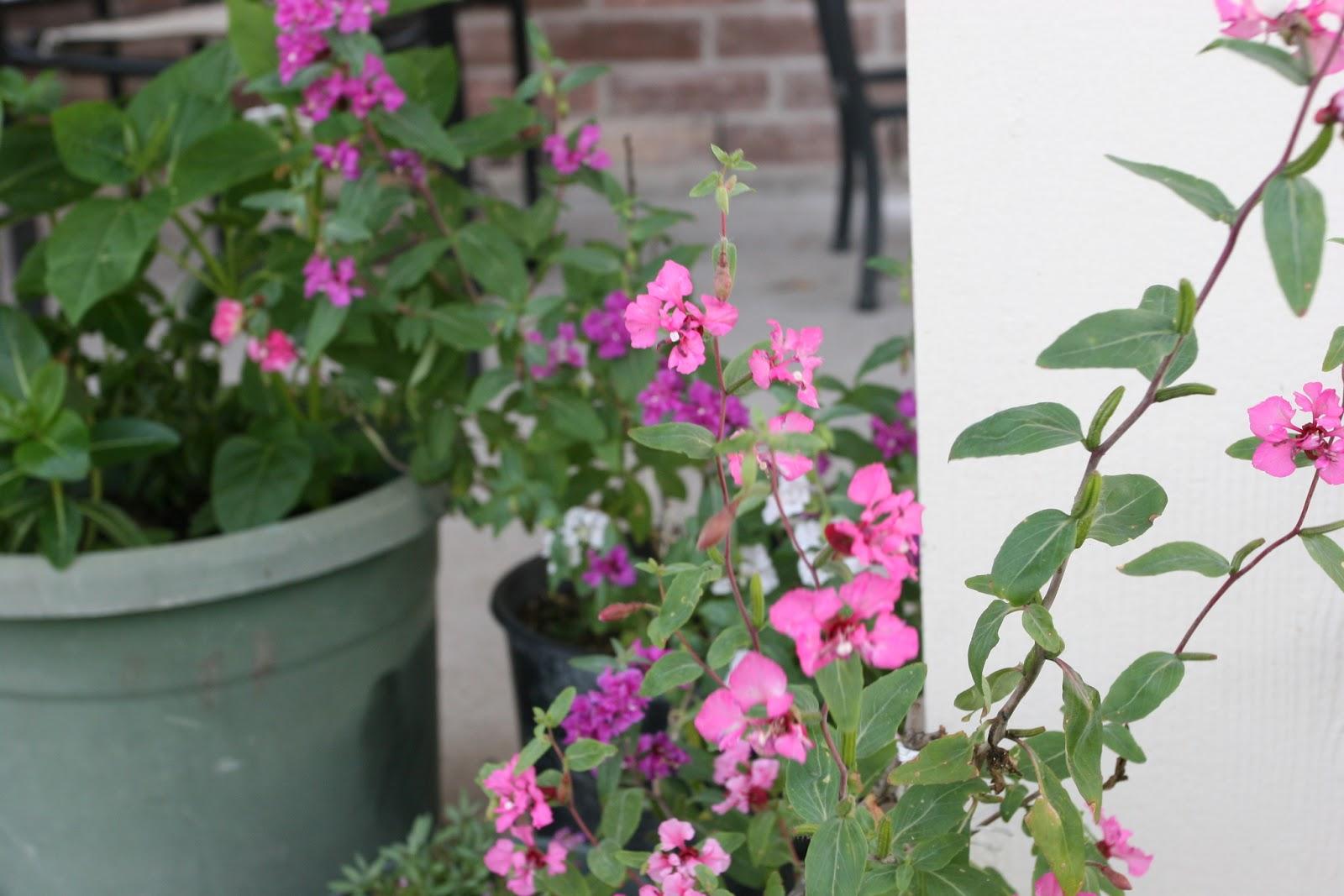 Gardening 2012 - IMG_2899.JPG