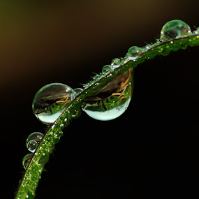 morning dew on the grass by Ateddi S - Nature Up Close Leaves & Grasses