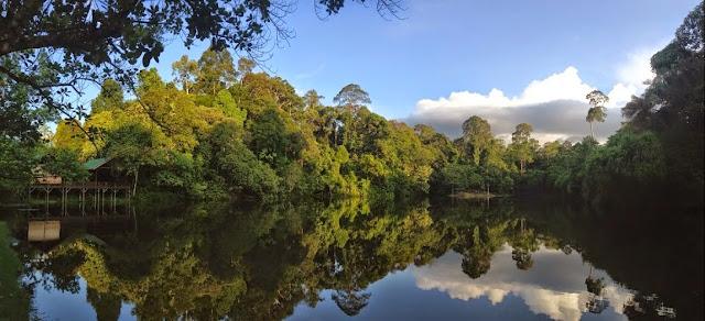 Sepilok, Sabah (Malaisie), 10 août 2014. Photo : T. Boucher