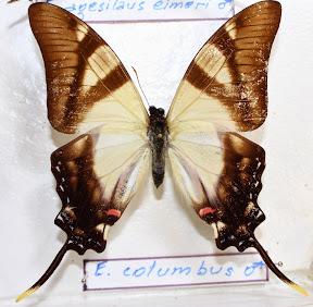 E. COLUMBUS.JPG