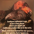 The California Condor; A Story of Tragedy, Survival and Redemption