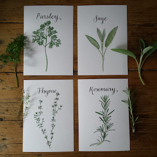 Parsley, Sage, Rosemary and Thyme :: www.AliceDrawsTheLine.co.uk