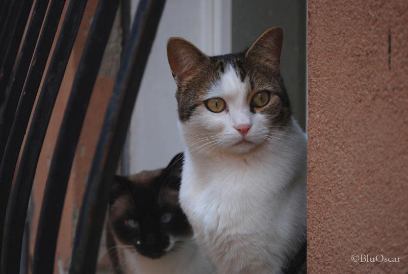 Gatti veneziani 06 02 2010 N 2