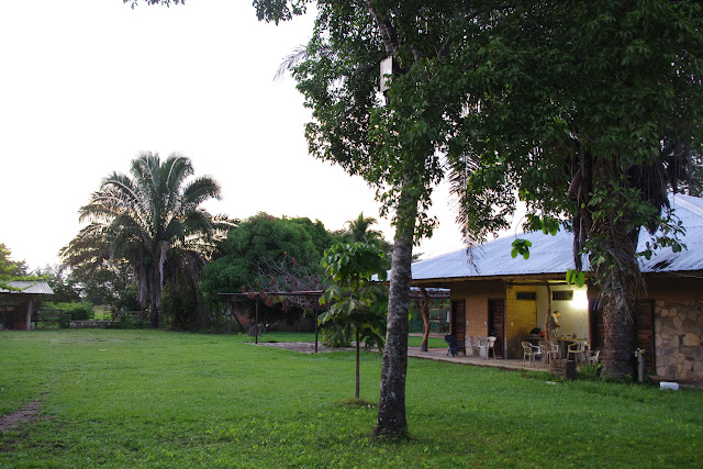 Fundo Palmarito, 265 m (Yopal, Casanare, Colombie), 8 novembre 2015. Photo : J.-M. Gayman