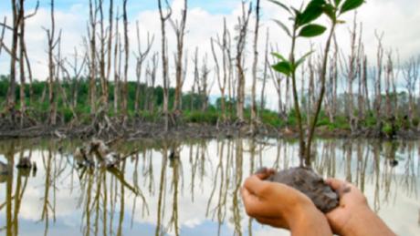Pemuda Ikut Andil Dalam Penanaman Bibit Mangrove, Cerminkan Jiwa Pancasila