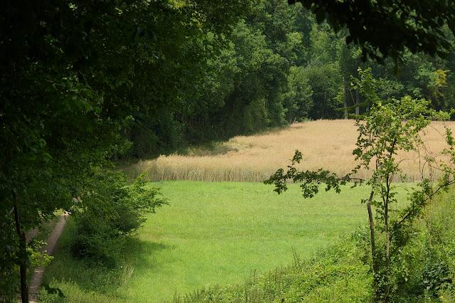 Les Hautes-Lisières (Rouvres, 28), 28 juin 2011. Photo : J.-M. Gayman