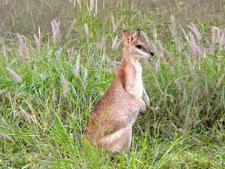 wildlife-kangaroo-1.jpg