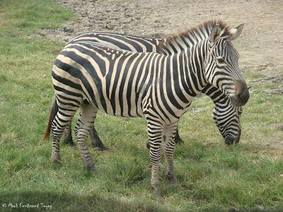 Safari World - Safari Park Bangkok Photo 11
