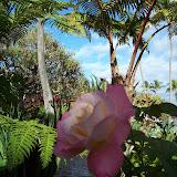 Hawaii Day 6 - 100_7614.JPG