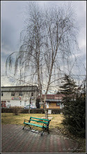 Photo: Mesteacăn (Betula) - din Parcul Teilor - 2017.02.04
