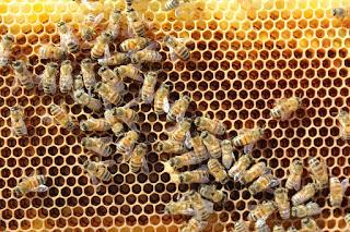 PLC Apiary - Hive%2B2.JPG
