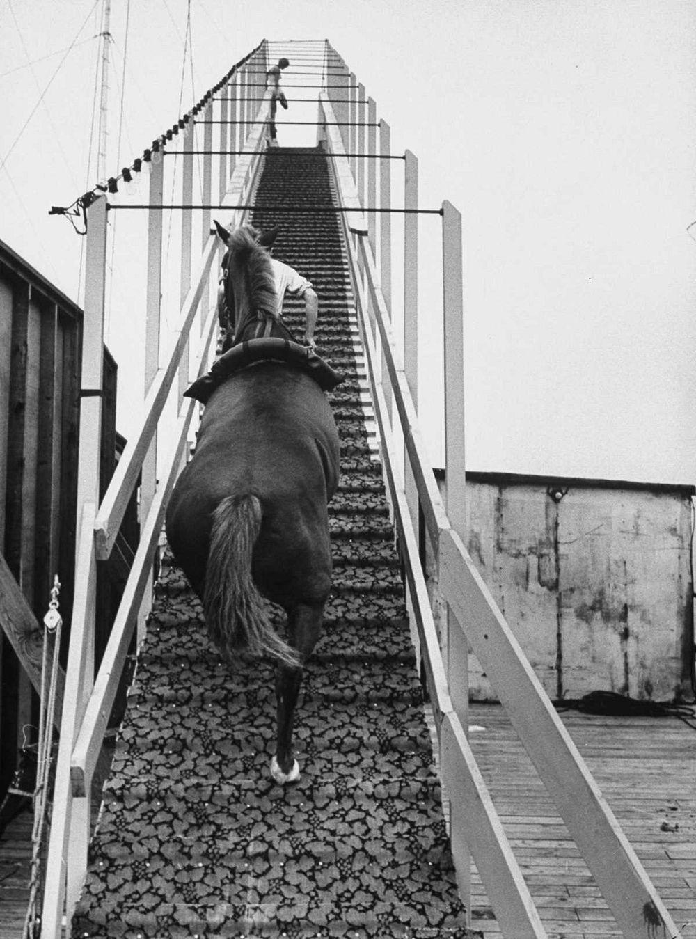 diving-horses-5