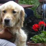 20110629 Hundespaziergang38 - HS%2B38%2B%252817%2529.JPG