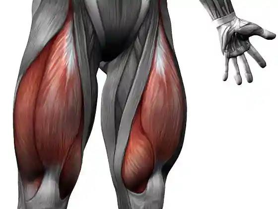 علاج الشد العضلي والتمزق العضلى في الفخذ الامامي