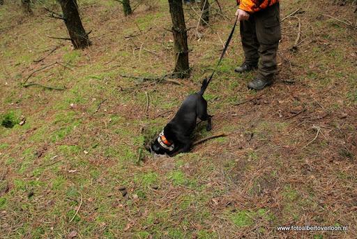 vossenjacht in de Bossen van overloon 18-02-2012 (42).JPG