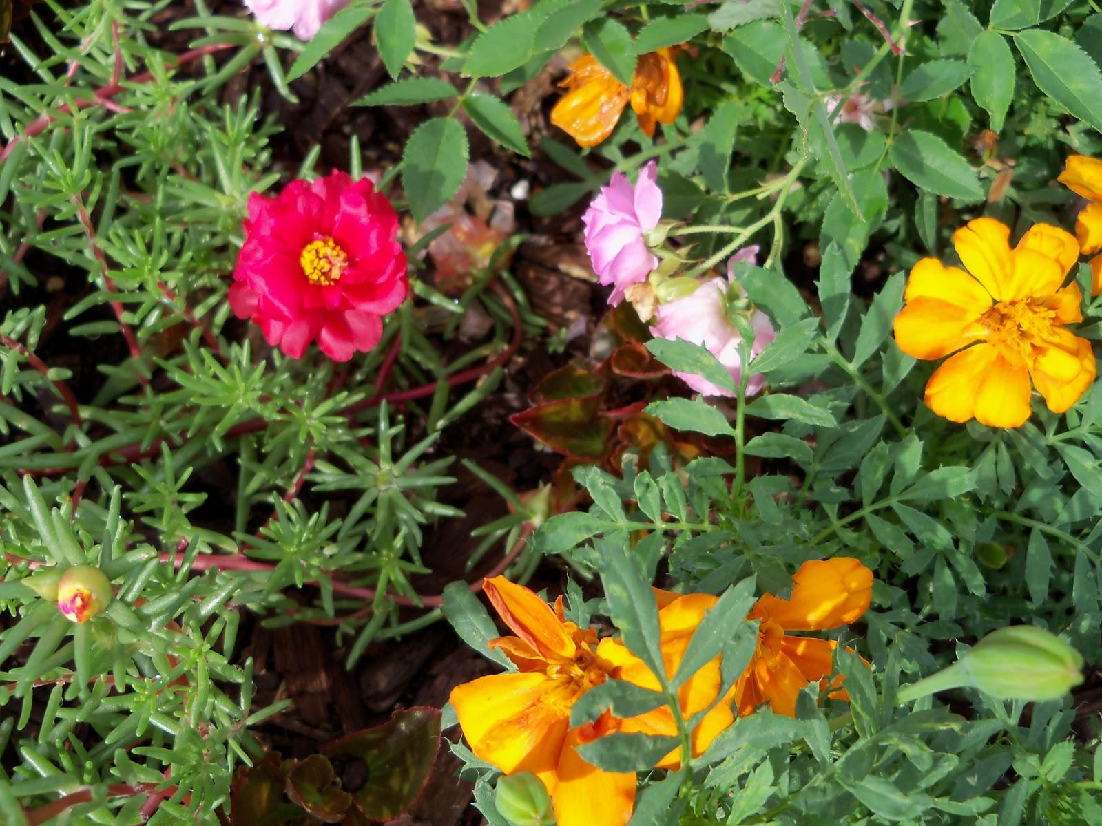 Gardening 2010, Part Two - 101_2212.JPG