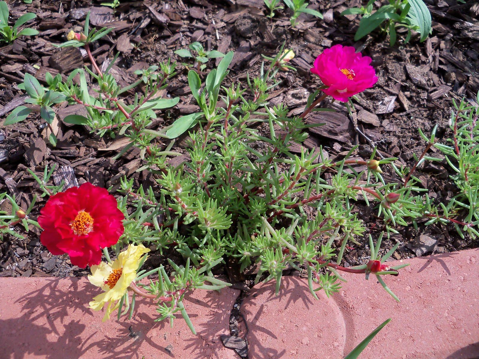 Gardening 2010 - 101_1639.JPG