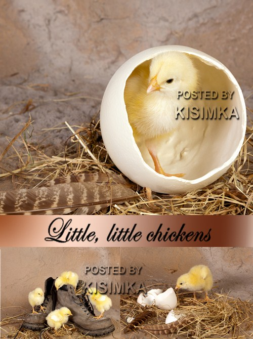 Stock Photo: Little, little chickens