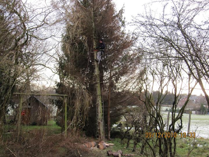 bomen snoeien en kappen - 003.JPG