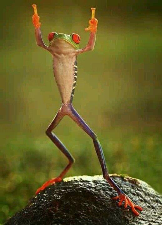 [frog%5B3%5D]
