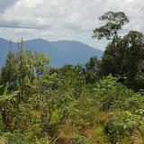 Crocker Range, à 40 km de Tambunan (Sabah, Malaisie, Bornéo), 19 août 2011. Photo : J.-M. Gayman