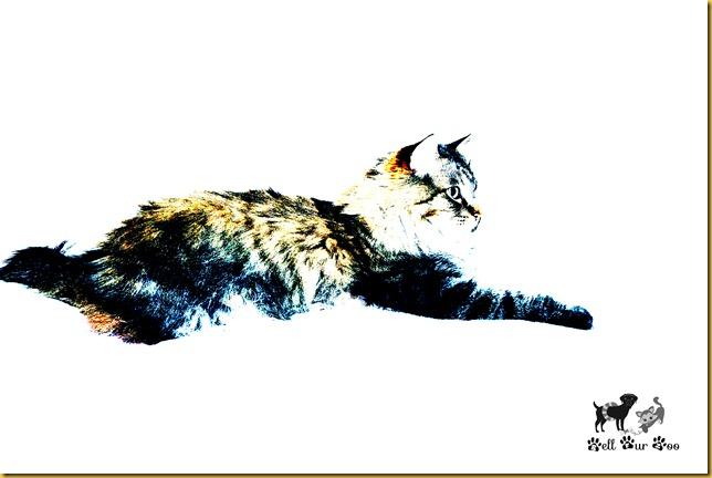 Matilda (CA Bell Fur Zoo)