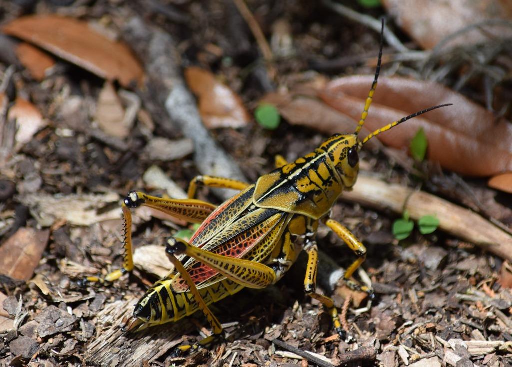 [Grasshopper%5B3%5D]