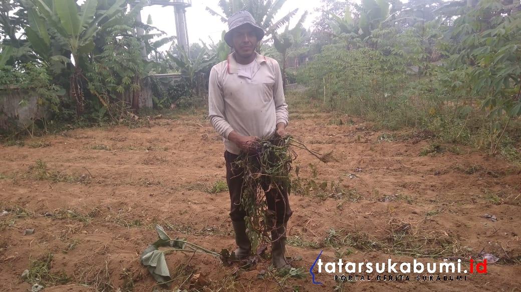 140 Hektare Areal Pertanian di Kecamatan Sukabumi Kekeringan