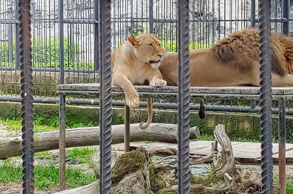 Tarsus Hayvan Parkı