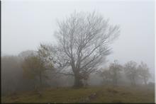 Cordal sur de Arraialde