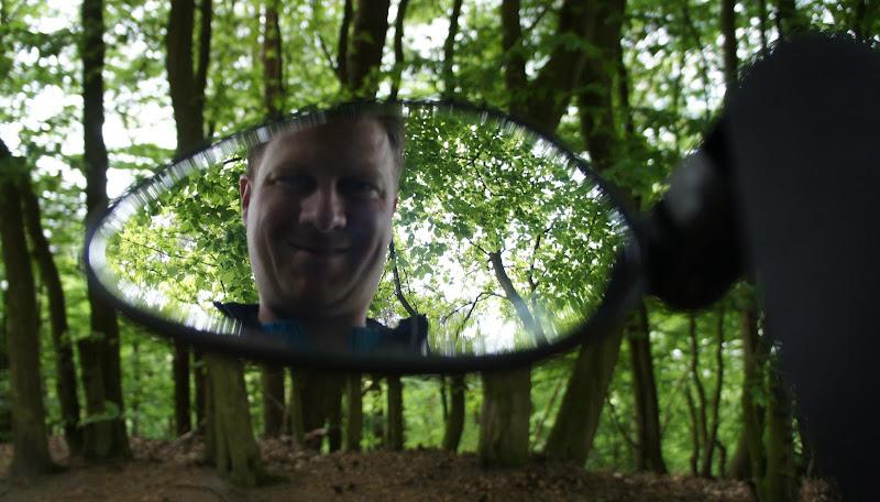 Reflektion im Wald