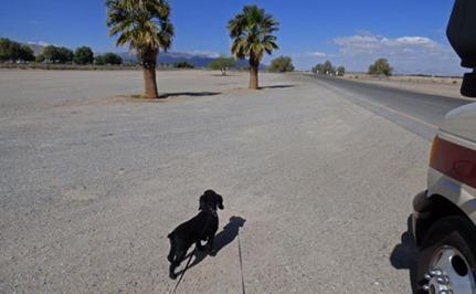 Mojave Desert Rest Area