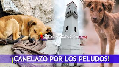 """En Pitalito realizarán """"canelazo"""" en pro de los peludos rescatados de la calle"""
