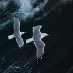 A ras del mar.jpg