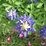 Gardening 2013 - IMG_20130414_102419.jpg